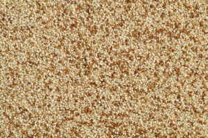 Photo closeup of dry teff grain from above