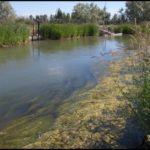 Photo of twin falls canal with water full of aquatic weeds