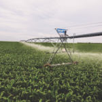 Photo of a pivot watering corn crop field